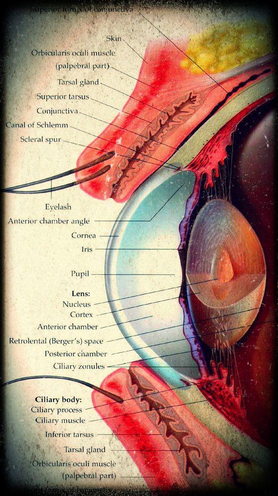 КТ глазных орбит
