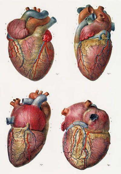 Томография сердца