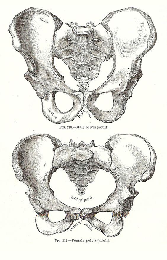 МРТ органов малого таза